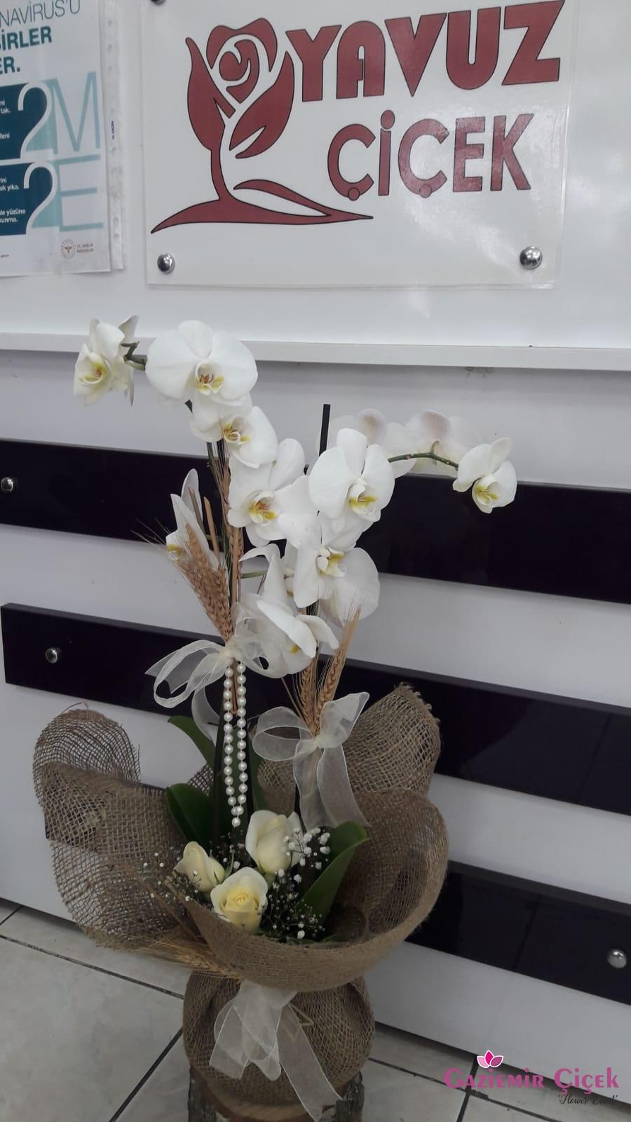 iki dallı aranjmanılı orkide